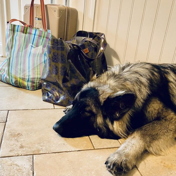 Max waiting patiently near some of the packed bags while we got ready to leave the house for Hurricane Henri.